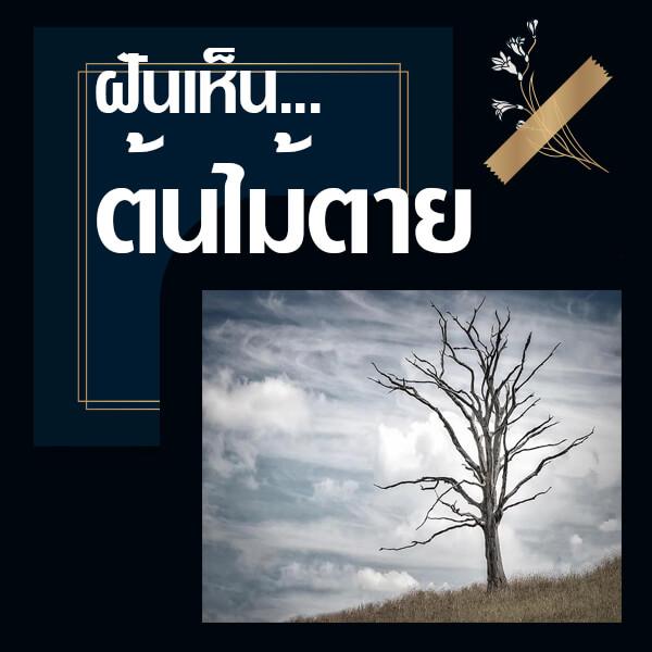 ทำนายฝันเห็นต้นไม้ตาย